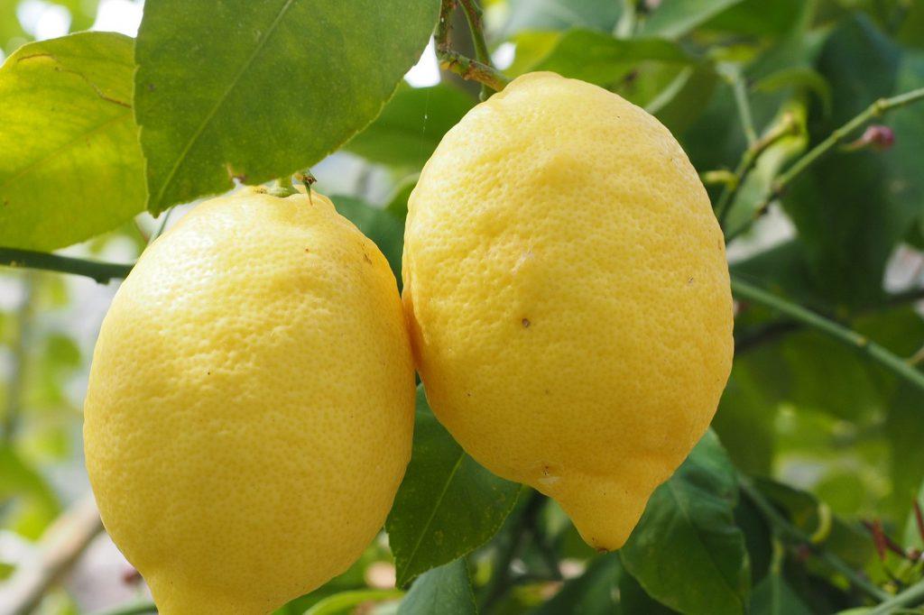 Zitronengelb Zitrone