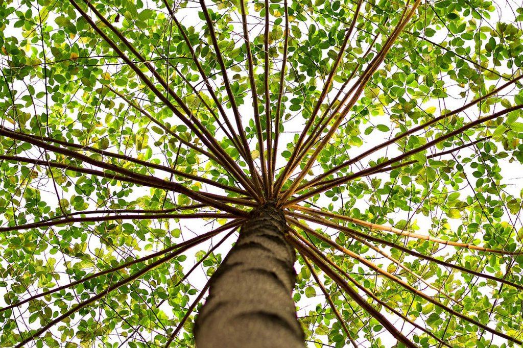 Element Holz - Baum nach oben